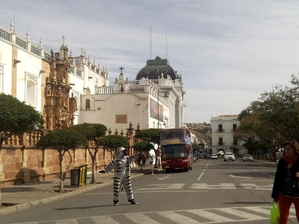 Zèbre faisant la circulation dans le centre ville de Sucre en Bolivie
