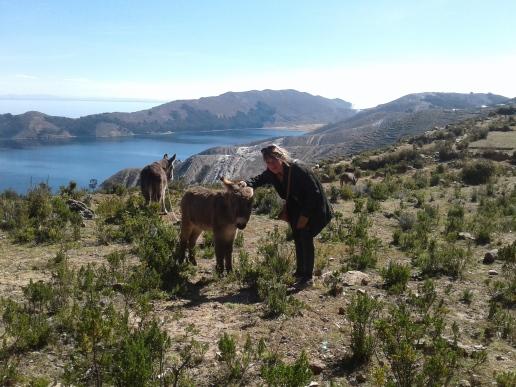 Âne sur l'isla del sol en Bolivie