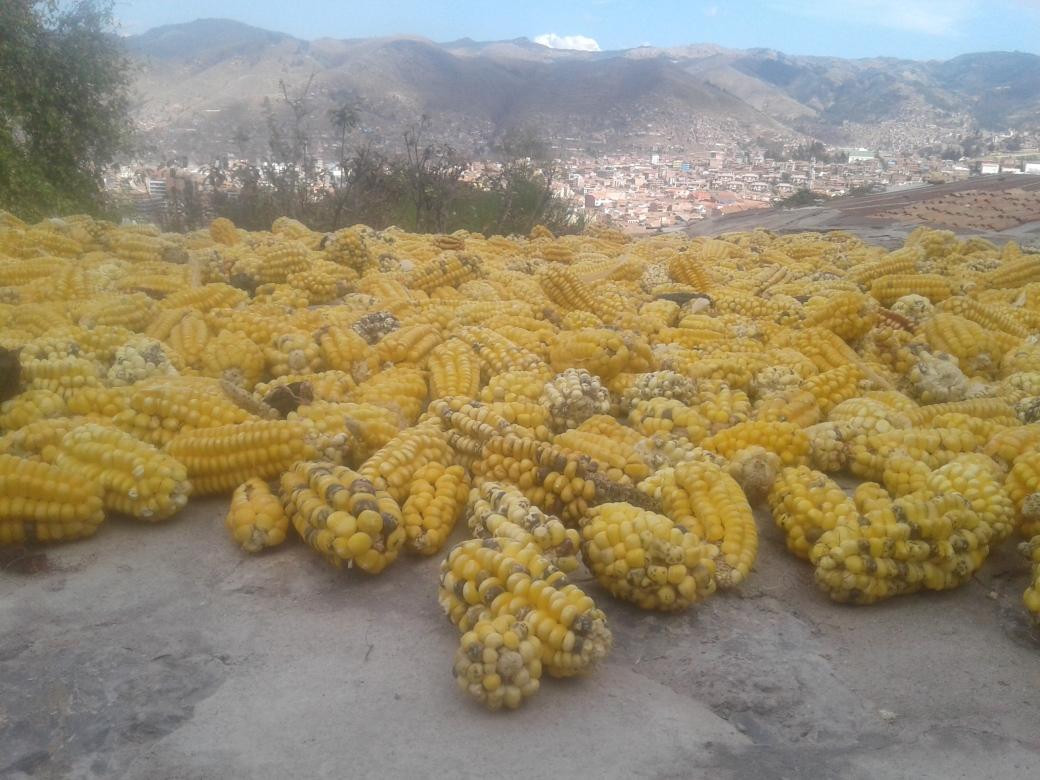 Maïs séchant sur le terrasse de l'Hospedaje Inka à Cuzco